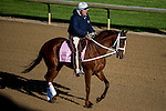 APRIL 28, 2015: I'm A Chatterbox, trained by Kenny McPeek exercises in preparation for the 141st Kentucky Oaks at Churchill Downs in Louisville, Kentucky. Jon Durr/ESW/Cal Sport Media