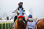 March 27, 2021: WILDMAN JACK, #12 in the post parade for the Golden Shaheen on Dubai World Cup Day, Meydan Racecourse, Dubai, UAE. Shamela Hanley/Eclipse Sportswire/CSM