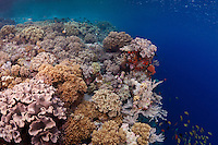 The dropoff on the edge of a colorful coral reef off Wakatobi, southeast Sulawesi, Indonesia.