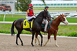 February 21, 2015: Mystery Train with Francisco Torres up in the Mineshaft Handicap at the New Orleans Fairgrounds Risen Star Stakes Day. Steve Dalmado/ESW/CSM