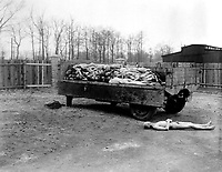A truck load of bodies of prisoners of the Nazis, in the Buchenwald concentration camp at Weimar, Germany.  The bodies were about to be disposed of by burning when the camp was captured by troops of the 3rd U.S. Army.  April 14, 1945.  Pfc. W. Chichersky.  (Army)<br /> NARA FILE #:  111-SC-203464<br /> WAR & CONFLICT BOOK #:  1120