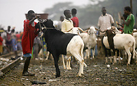 La communautÈ musulmane de CÙte d'Ivoire va fÍter la Tabaski (fÍte du mouton) le 1er septembre 2017 - Abidjan - 29 Ao˚t 2017