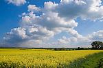 Europa, DEU, Deutschland, Nordrhein Westfalen, NRW, Westfalen, Soester Boerde, Bad Sassendorf - Opmuenden, Agrarlandschaft, Acker, Feld, Anbau, Raps, Rapsbluete, Fruehling, Bluehender Raps, Himmel, Wolkenstimmung, Cumuluswolken, Kategorien und Themen, Landwirtschaft, Landwirtschaftlich, Agrar, Agrarwirtschaft, Erzeugung, Landwirtschaftliche Produkte, Wetter, Himmel, Wolken, Wolkenkunde, Wetterbeobachtung, Wetterelemente, Wetterlage, Wetterkunde, Witterung, Witterungsbedingungen, Wettererscheinungen, Meteorologie, Bauernregeln, Wettervorhersage, Wolkenfotografie, Wetterphaenomene, Wolkenklassifikation, Wolkenbilder, Wolkenfoto....[Fuer die Nutzung gelten die jeweils gueltigen Allgemeinen Liefer-und Geschaeftsbedingungen. Nutzung nur gegen Verwendungsmeldung und Nachweis. Download der AGB unter http://www.image-box.com oder werden auf Anfrage zugesendet. Freigabe ist vorher erforderlich. Jede Nutzung des Fotos ist honorarpflichtig gemaess derzeit gueltiger MFM Liste - Kontakt, Uwe Schmid-Fotografie, Duisburg, Tel. (+49).2065.677997, ..archiv@image-box.com, www.image-box.com]