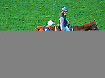 October 27, 2014:  Unbridled's Note, trained by Steve Asmussen, exercises in preparation for the Breeders' Cup Turf Sprint at Santa Anita Race Course in Arcadia, California on October 27, 2014. John Voorhees/ESW/CSM