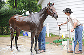 Mine That Bird returns to Saratoga after surgery