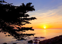 Sunset and Monterey Cypress tree. 17 Mile Drive. Pebble Beach, California