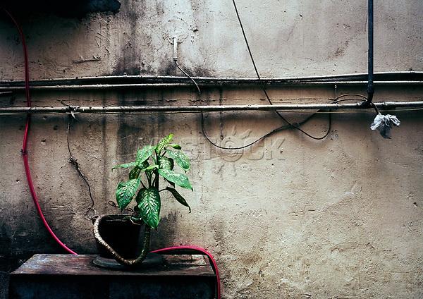 Flora, Pflanze, Wand, trist, Hongkong, China, 2003, Hong Kong Flora<br />  ***Keine Social_Media Nutzung***<br /> <br /> Engl.: Asia, China, Hong Kong, urban flora, plant, wall<br /> ***No social media use***