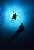 Silhouette of a turtle and scuba diver<br /> Virgin Islands
