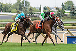 Toronto, ON - September  17:  The Pizza Man, #7, ridden by Flavien Prat runs to victory  at the Northern Dancer Turf  Stakes  at Woodbine Race Course on September 17, 2016 in Toronto, Ontario. (Photo by Victor Biro/Eclipse Sportswire/Getty Images)