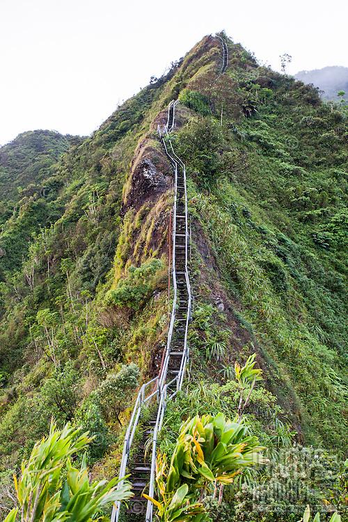 "Steps leading upward into the Ko'olau mountains on the Haiku Stairs (""Stairway to Heaven"") hiking trail in Kaneohe, O'ahu"