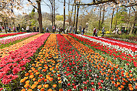 "Hollande, région des champs de fleurs, Lisse, Keukenhof // Holland, ""Dune and Bulb Region"" in April, Lisse, Keukenhof, flower park in spring, tulips."