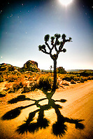 """""""Where The Streets Have No Name"""" - Joshua Tree NP, CA - a moon lite night<br /> All rights reserved"""