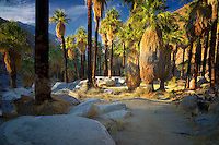 Path in Palm Canyon. Indian Canyons. Palm Springs, California.