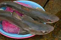 Spiny dogfish, Squalus acanthias, for sale at Jagalshi seafood market, Busan, South Korea