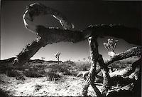 Desert through felled tree<br />