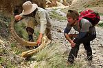 Snow Leopard (Panthera uncia) biologists, Shannon Kachel and Khalil Karimov, investigating Siberian Ibex (Capra sibirica) horns, Pikertyk, Tien Shan Mountains, eastern Kyrgyzstan