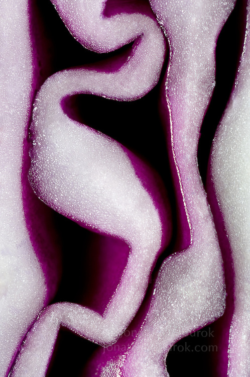 close-up of red cabbage (Brassica oleracea Capitata) - commercial/editorial licensing for this image is available through: http://www.gettyimages.com/detail/200280236-001/Stone