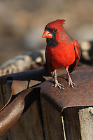 """This Cardinal's """"shovel ready"""", no taxpayers' money required :)"""