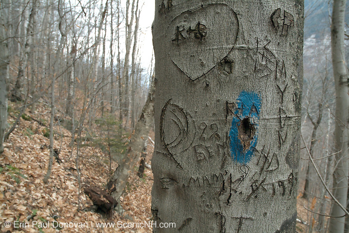Close-up of initials carved on a tree on the side of a hiking trail  in a New Hampshire forest.