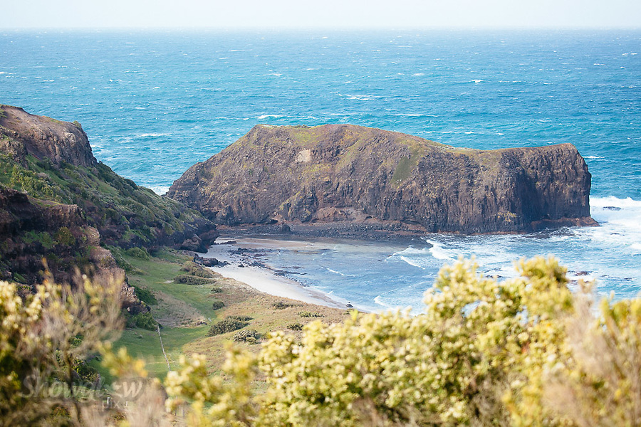 Image Ref: CA944<br /> Location: Bushrangers Bay Track<br /> Date of Shot: 07.09.19