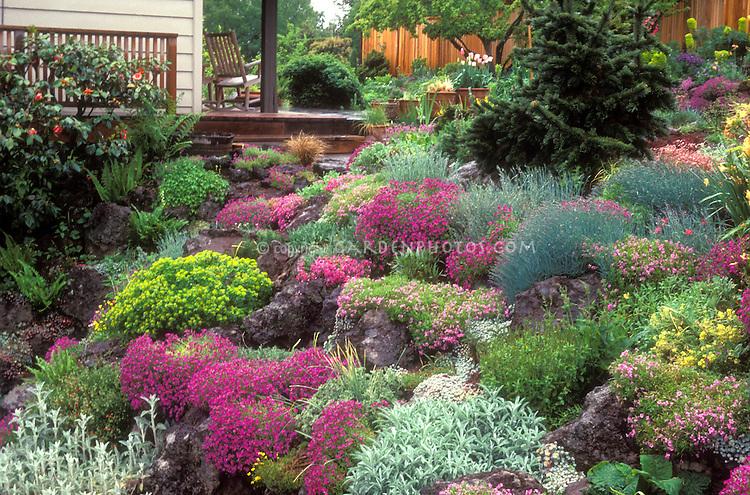 Gorgeous lush Rock garden in flower in spring on slope hillside, house, deck, rocking chair, alpine plants, Dianthus, Festuca, fence, evergreens- Jan Waldemuth's garden, Portland, Oregon
