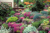 Gorgeous lush Rock garden in flower in spring on slope hillside, house, deck, rocking chair, alpine plants, Dianthus, Festuca, fence, evergreens- Jan Waldemuth's garden, Portland, Oregon