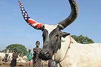 SOUTH SUDAN  Bahr al Ghazal region , Lakes State, village Yeri cattle camp near Rumbek, bull horn wrapped in US flag / SUED-SUDAN  Bahr el Ghazal region , Lakes State, Dorf Yeri, Dinka mit Zeburindern im cattle camp bei Rumbek | <br /> Africa