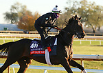 Nay Lady Nay, trained by trainer Chad C. Brown, exercises in preparation for the Breeders' Cup Filly & Mare Turf at Keeneland Racetrack in Lexington, Kentucky on November 4, 2020.