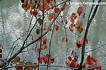 Red leaves and branches by the water against greenish gray reflections in water.  <br /> Nature photo with a touch of impressionism by Tomoko Yamamoto.  Original on 35mm slide film.  The photo enlarges well.
