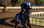 November 4, 2020: Sistercharlie, trained by trainer Chad C. Brown, exercises in preparation for the Breeders' Cup Filly & Mare Turf at Keeneland Racetrack in Lexington, Kentucky on November 4, 2020. Alex Evers/Eclipse Sportswire/Breeders Cup