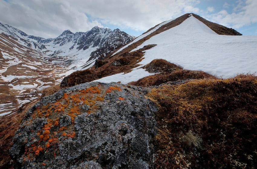 Lichens on boulders along the ridge to South Raina Peak. Eagle River, Alaska.