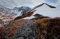Lichens on boulders along the ridge to South Raina Peak. Eagle River, Alaska.
