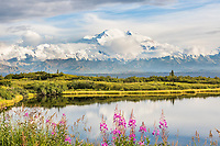 Pink fireweed blossoms in front of Reflection Pond and Mt. Denali, Denali National Park, Alaska.