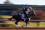 November 4, 2020: Crazy Beautiful, trained by trainer Kenneth G. McPeek, exercises in preparation for the Breeders' Cup Juvenile Fillies at Keeneland Racetrack in Lexington, Kentucky on November 4, 2020. Gabriella Audi/Eclipse Sportswire/Breeder's Cup/CSM