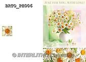 Alfredo, FLOWERS, BLUMEN, FLORES,  photos+++++,BRTOPH006,#F#
