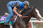 DEL MAR, CA - NOVEMBER 01: Talismanic, owned by Godolphin Stable Lessee and trained by Andre Fabre, exercises in preparation for Longines Breeders' Cup Turf during morning workouts at Del Mar Thoroughbred Club on November 1, 2017 in Del Mar, California. (Photo by Anna Purdy/Eclipse Sportswire/Breeders Cup)