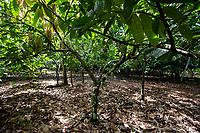 Sede da cooperativa na cidade de Tomé Açú.<br /> Produção, colheita e estocagem de cacau organico nordeste do estado<br /> Tomé Açú Pará, Brasil.<br /> Foto Carlos Borges<br /> 11/05/2016