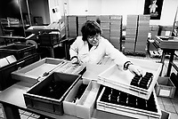 """France. Saône-et-Loire department. Chalon-sur-Saône. Kodak factory. Camera recycling. An handicapped woman works to dismantle, control and reassemble the cameras. The """"ready to take pictures"""" camera is a small camera commonly described as disposable but in fact assembled for customers to return it after use. After being dismantled, verified and meticulously cleaned, some pieces are reused, other recycled (86%). The recycled parts are the front, film, upper and rear part, lens. The plastics parts are torn, melted, recasted and then reassembled.  Eastman Kodak Company. Chalon-sur-Saône is located in the south of the Burgundy region. © 1996 Didier Ruef .."""