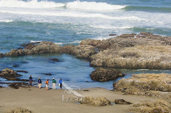 People viewing harbor seals and tidepools along Oregon coast.