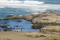 People viewing harbor seals and tidepools along Oregon coast.