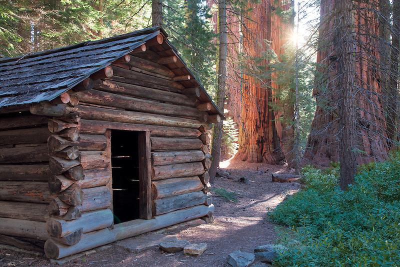 Squatters Cabin with Giant Sequoia (Sequoiadendron giganteum) Sequoia National Park, California