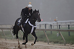 Preakness contender Dialed In gallops in the fog Thursday morning at Pimlico Race Course, May 19, 2011.(Joan Fairman Kanes/EclipseSportswire)