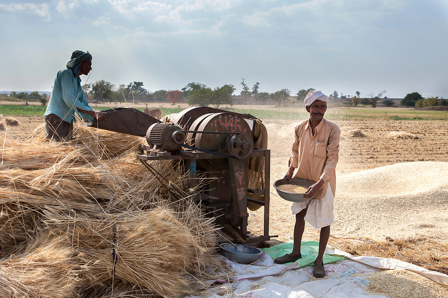 Agricultural workers use an electric thresher to thresh wheat for animal feed in Bagdi, India.