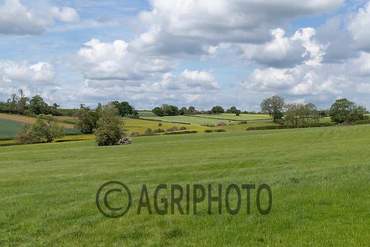 7-6-2021 Pasture land in Rutland <br /> Tim Scrivener Photographer 07850 303986<br />      ....Covering Agriculture In The UK....