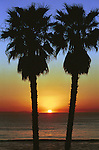 Palms at Pacific Ocean sunset California,       Fine Art Photography, palm trees, sunset, ocean sunset, Pacific Ocean sunset,  Pacific Ocean, photographs fulfill a creative vision of the artist fine art photography, buy art, limited edition print, buy fine art, travel photography, photo art, prints, fine art, Fine Art Photography by Ron Bennett, Fine Art, Fine Art photography, Art Photography, Copyright RonBennettPhotography.com © Fine Art Photography by Ron Bennett, Fine Art, Fine Art photography, Art Photography, Copyright RonBennettPhotography.com ©