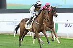 February 20, 2021: TRUE SELF #12 ridden by Hollie Doyel wins The Neom Turf Cup for Willie Mullins on Saudi Cup Day, King Abdulaziz Racecourse, Riyadh, Saudi Arabia. Shamela Hanley/Eclipse Sportswire/CSM