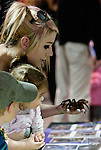 Stephanie Neal shows a brazilian salmon pink bird eater tarantula to her daughter, 2 year old Lilly at the Reno Repticon event held on Sunday afternoon, February 10, 2013 at the Reno Livestock Events Center in Reno, Nevada.