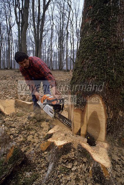 Europe/France/Centre/41/Loir-et-Cher/Forêt de Russy/Environ de Saint-Gervais-la-Forêt : Bcheron et exploitation forestière utilisé par la tonnellerie Seguin Moreau à Cognac