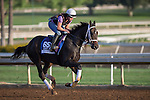 OCT 27 2014:Carve, trained by Kiaran McLaughlin, exercises in preparation for the Breeders' Cup Dirt Mile at Santa Anita Race Course in Arcadia, California on October 27, 2014. Kazushi Ishida/ESW/CSM