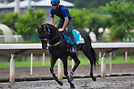SHA TIN,HONG KONG-APRIL 27: Bow Creek ,trained by John O'Shea,exercises in preparation for the Champions Mile at Sha Tin Racecourse on April 27,2016 in Sha Tin,New Territories,Hong Kong (Photo by Kaz Ishida/Eclipse Sportswire/Getty Images)